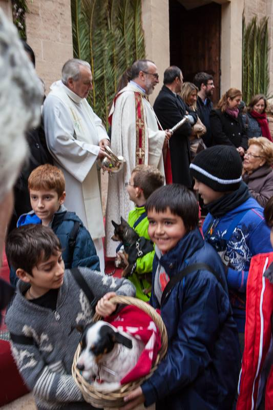 Tiersegnung zu Sant Antoni