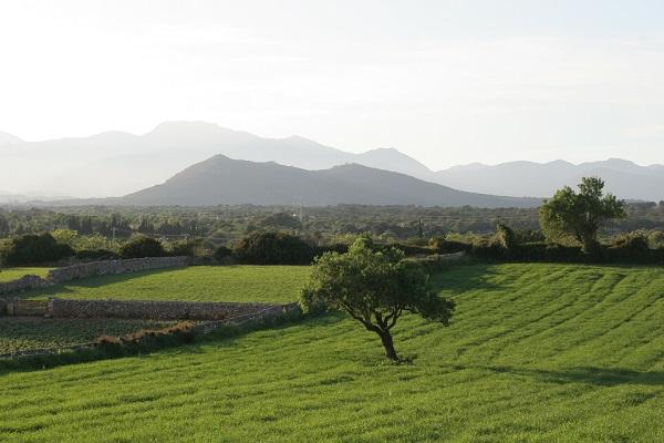 Grüne Landschaft von Mallorca Inselmitte