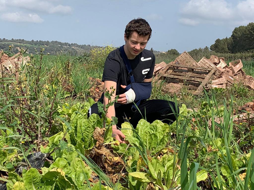 Auch Nickys Söhne helfen tatkräftig mit. Malik beim Ernten.