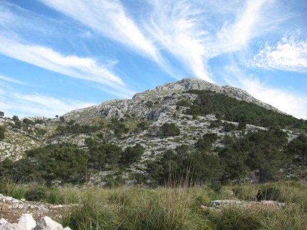 Estellenc - Blick auf Galatzó