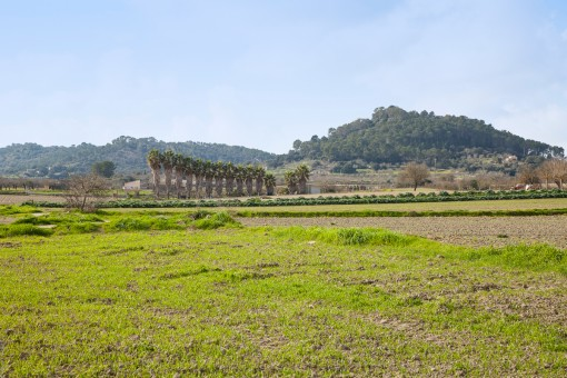 Ruhig gelegenes Grundstück mit schönem Blick, Ruine und 2 Brunnen bei Sineu