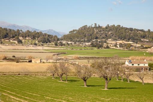 Blick auf die benachbarten Felder