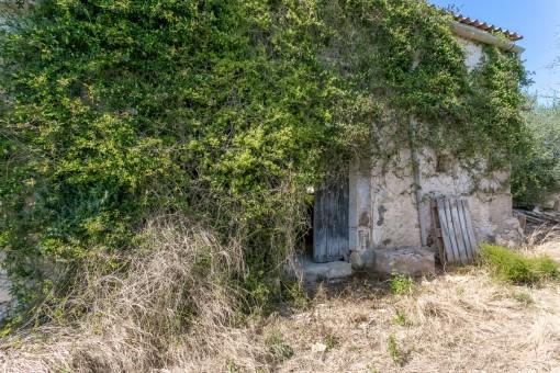 Die Ruinen sind mit Efeu bewachsen