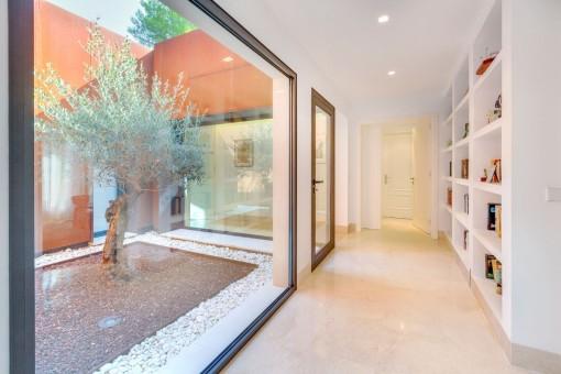 Patio mit Olivenbaum