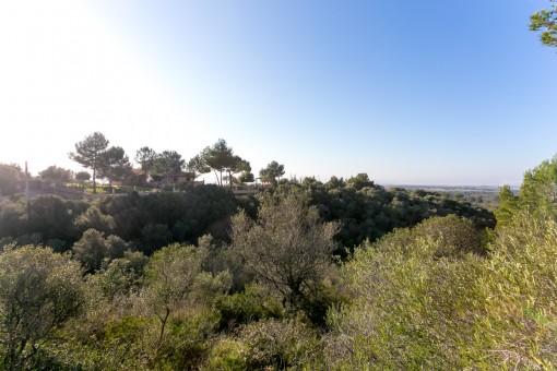 Großes Grundstück mit Weitblick in Puntiro