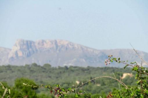 Schönes Grundstück mit Aussicht auf das Tramuntana-Gebirge in Ariany