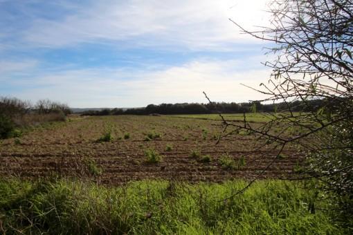 Das Grundstück bietet 15.500,00 sqm
