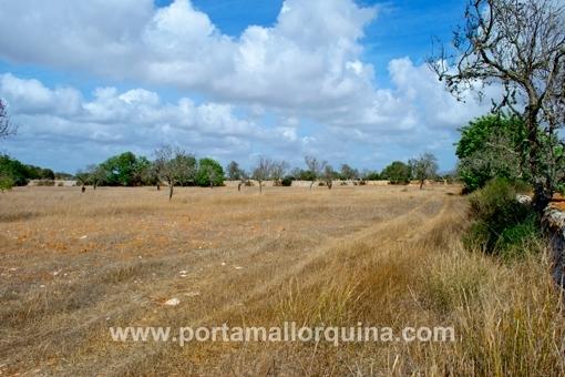 Grundstück nahe Santanyi