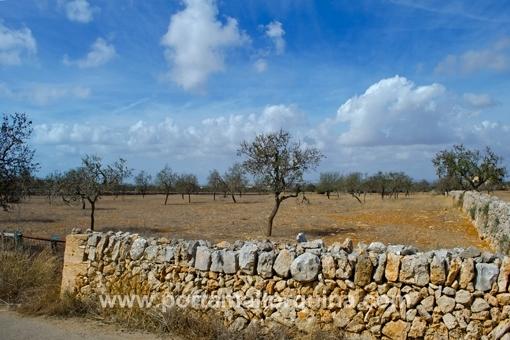 Baugrundstück in Santanyi