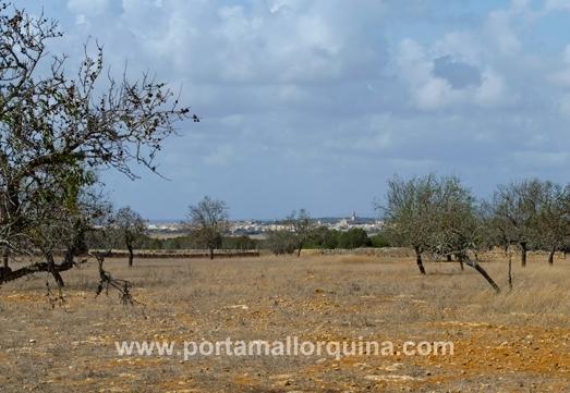 Baugrundstück zwischen Es Llombards und Ses Salines