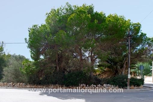 Sonniges Grundstück in Cala Llombards