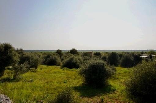 Ländliches Baugrundstück mit Basisprojekt in Fußnähe zum Ort Santanyi