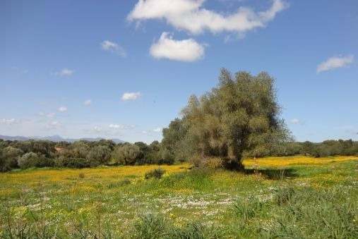 Grundstück in Palma Umgebung