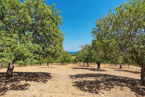 Großzügiges Grundstück in S'Horta