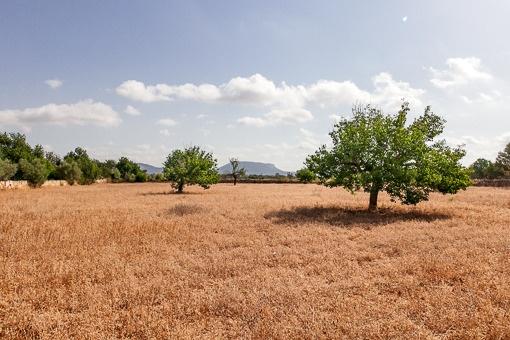 Großzügiges Grundstück von 15.000 qm