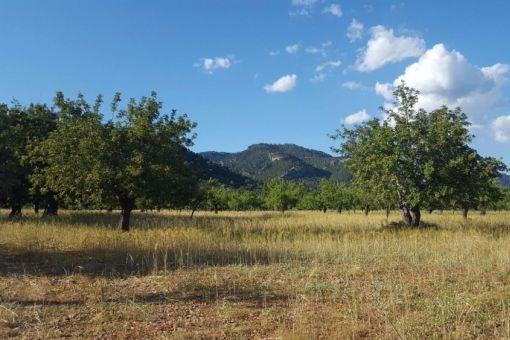 Großes Grundstück mit vielen Möglichkeiten in Selva