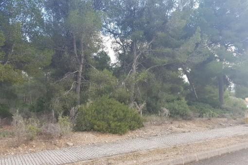 Großes Grundstück in zentraler Lage in Santa Ponsa