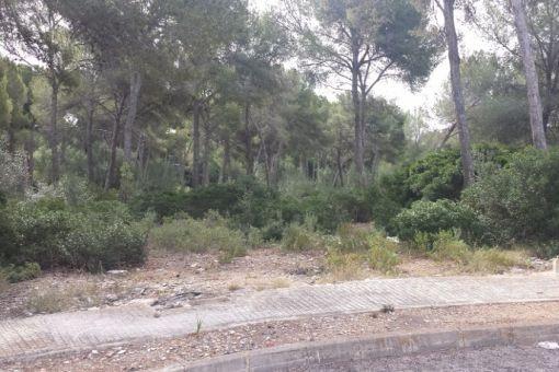 Großes, flaches Grundstück in einer ruhigen Strasse in Santa Ponsa