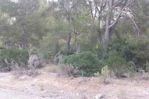 Flaches Grundstück in Santa Ponsa für den Bau eines 830 qm großen Einfamilienhauses