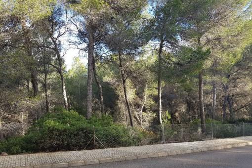 Grundstück für ein großes Einfamilienhaus am Golfplatz von Santa Ponsa