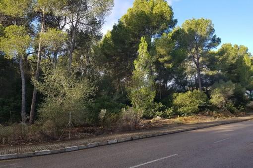 Großes Eckgrundstück für eine Luxusvilla in der Nähe vom Golfplatz von Santa Ponsa