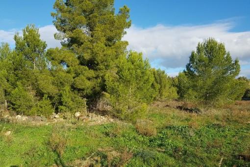 Baugrundstück in guter Lage von Santa Ponsa für 65 Luxus-Wohnungen