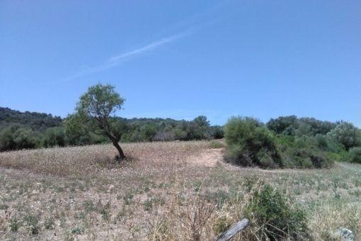 Einmaliges Grundstück