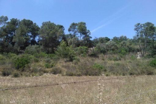 Grundstück 1