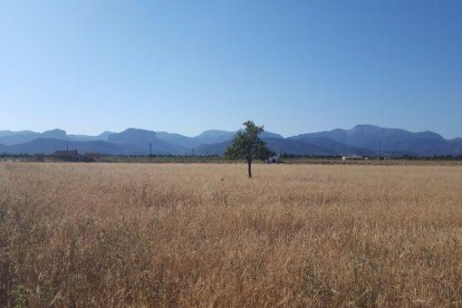 Schönes großes Grundstück mit Blick auf die Serra de Tramuntana bei Binissalem