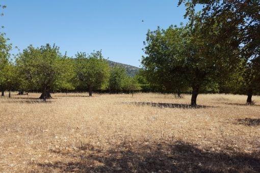 Grundstück in Solleric