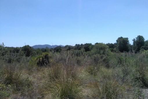 Sehr schönes, großes Grundstück zwischen Arta und San Lorenzo
