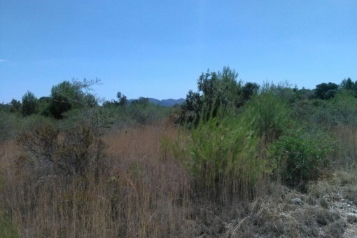 Grundstück 6