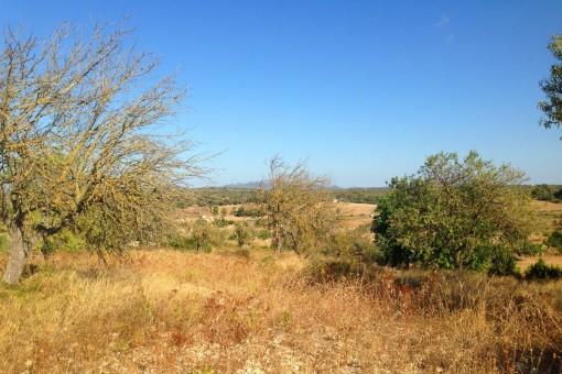 Grundstück mit Baulizenz inmitten der hügeligen Landschaften im Umland von Santa Margalida