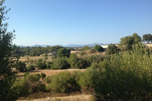 Baugenehmigungsfähiges Grundstück in Hanglage mit weitem, offenem Blick auf die Bucht von Alcúdia