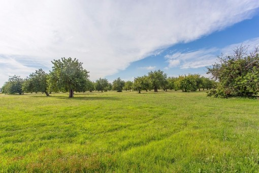 Großartiges, rustikales Finca-Anwesen in der Gemeinde von Palma mit einem 825.000 qm großen Grundstück
