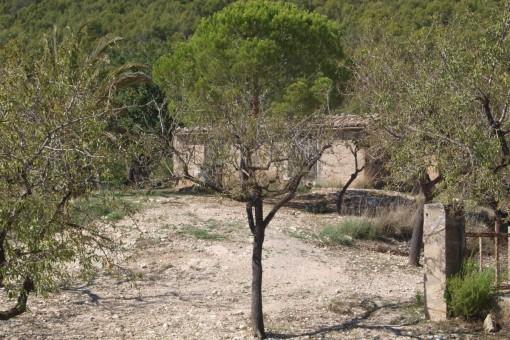 Finca mit 15.000 qm-Grundstück in Es Capdella