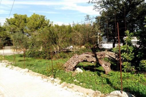 944 qm Baugrundstück für einen Projekt von 330 qm im Stadtbereich von Portol