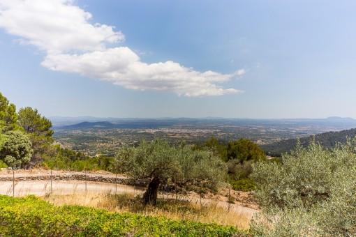 Panoramablick über Alcudia bis hin zu Palma