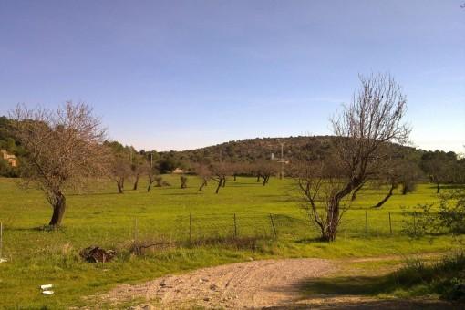 Baugrundstück mit Weitblick und  Möglichkeit der Pferdehaltung, Oliven- oder Weinanbau, ca. 100.000qm, bei Alaró