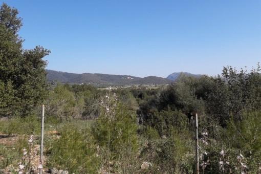 Grosses Grundstück in Campanet mit Weitsicht, eigenem Brunnen und gültiger Baugenehmigung