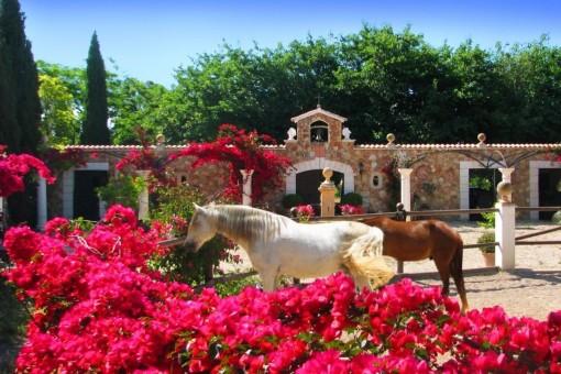 Stall für Pferde