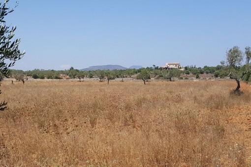 Grundstück bei Cala Llombards mit schönem Weitblick