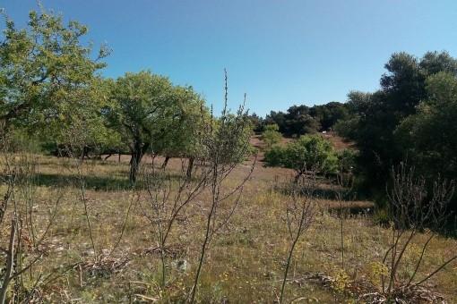 Großes Grundstück mit Casita in Arta