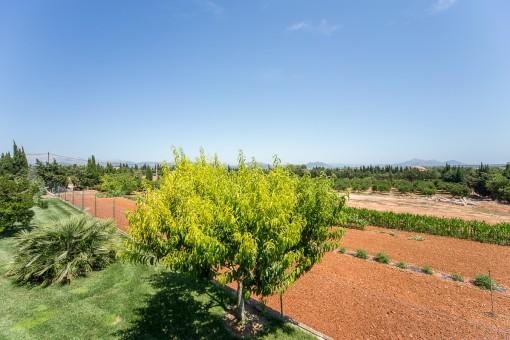 Sehr großes Grundstück mit vielen Obstbäumen