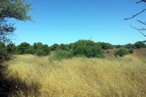 Fincagrundstück zwischen Campos und Sa Rapida