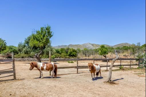 Viel Platz für Pferde