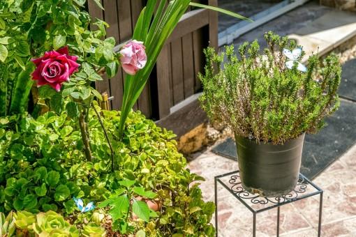 Details des liebevoll angelegten Gartens
