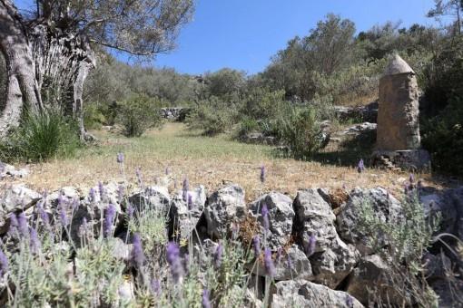 Im Naturschutzgebiet des Tramuntanagebirges gelegen
