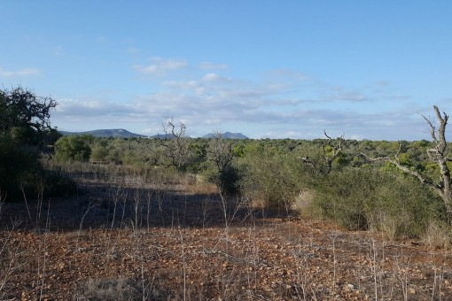 Traumgrundstück mit Panoramablick direkt am Parque de Mondrago