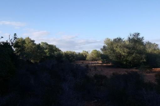 Das Grundstück liegt auf der Grenze zum Naturschutzpark Mondrago